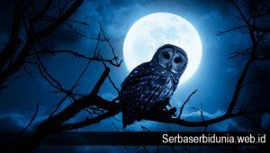 Beberapa Hewan Yang Bisa Melihat Dalam Kegelapan