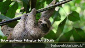 Beberapa Hewan Paling Lambat di Dunia